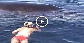 He swam up to what he thought was a dead whale, what happened next was amazing