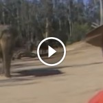 After 15 years, this man returns to visit an old friend. When the elephant sees him? GOOSEBUMPS